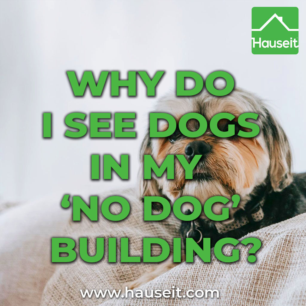 Many people specifically seek residency in pet-free buildings for a variety of reasons. So how can there be dogs in a no pet building?